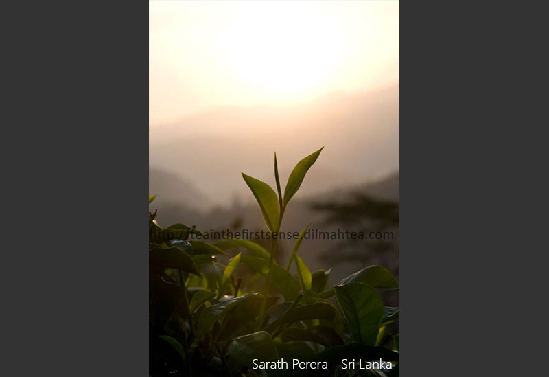 Sarath Perera